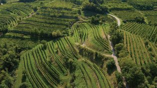 Vin fra Slovenia