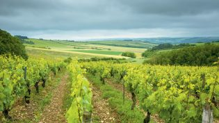 Burgund del 1